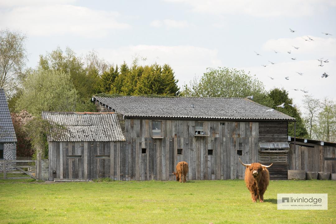 Garden sheds in barnwood, Olsene (B).
